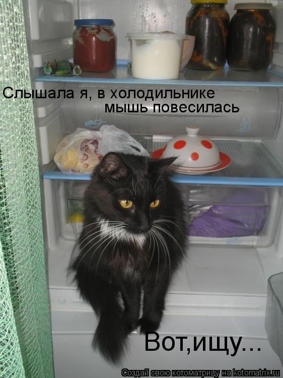 Котоматрица: Слышала я, в холодильнике  мышь повесилась Вот,ищу...