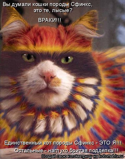Котоматрица: Вы думали кошки породы Сфинкс,  это те, лысые? ВРАКИ!!! Единственный кот породы Сфинкс - ЭТО Я!!! Остальные - наглухо бритая подделка!!!
