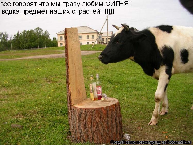 Котоматрица: все говорят что мы траву любим,ФИГНЯ водка предмет наших страстей!!!!!!! ! !