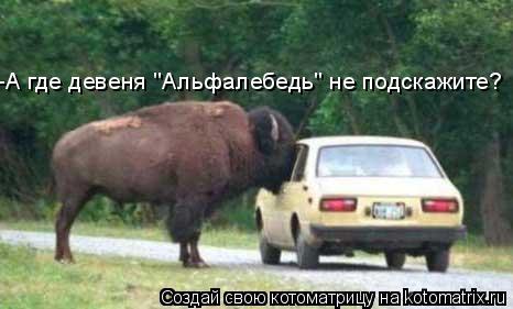 """Котоматрица: -А где девеня """"Альфалебедь"""" не подскажите?"""
