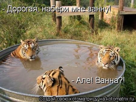 Котоматрица: - Дорогая, набери мне ванну! - Але! Ванна?!