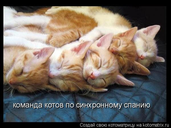 Котоматрица: команда котов по синхронному спанию