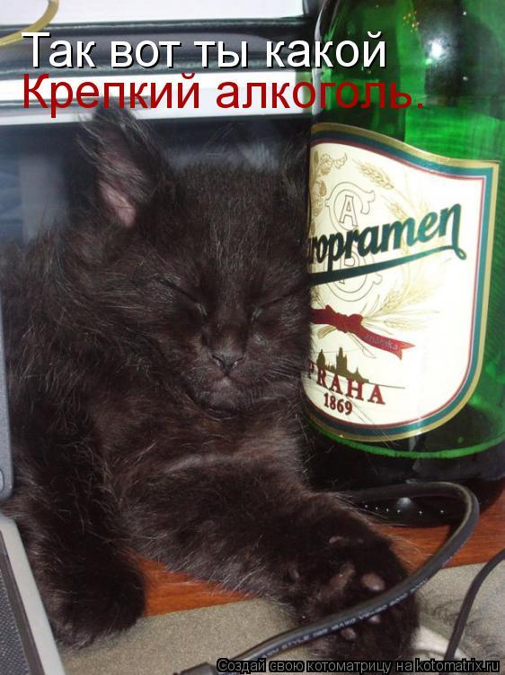 Котоматрица: Так вот ты какой Крепкий алкоголь.