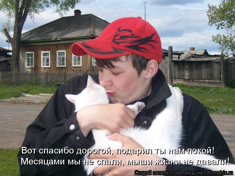 Котоматрица: Вот спасибо дорогой, подарил ты нам покой! Месяцами мы не спали, мыши жизни не давали!