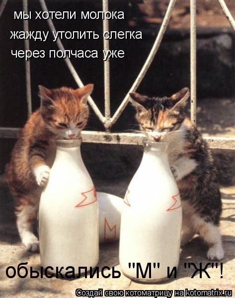 """Котоматрица: мы хотели молока жажду утолить слегка  через полчаса уже обыскались """"М"""" и """"Ж""""!"""