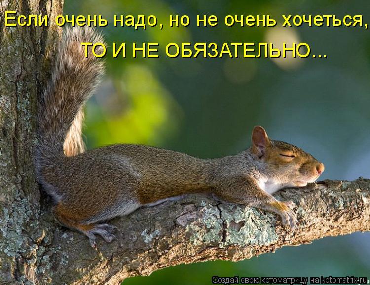 Котоматрица: Если очень надо, но не очень хочеться, ТО И НЕ ОБЯЗАТЕЛЬНО...