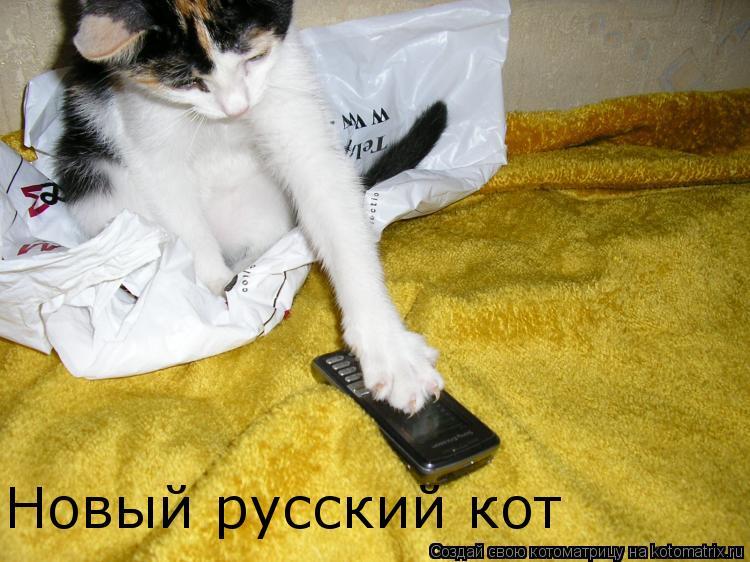 Котоматрица: Новый русский кот