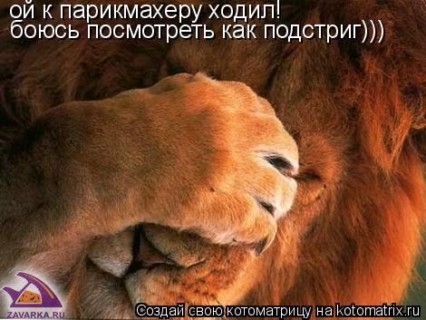 Котоматрица: ой к парикмахеру ходил! боюсь посмотреть как подстриг)))