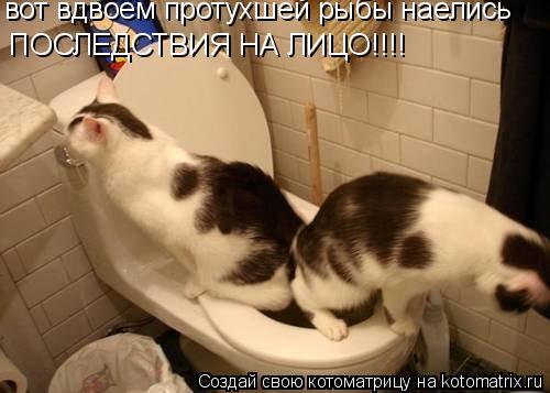 Котоматрица: вот вдвоем протухшей рыбы наелись ПОСЛЕДСТВИЯ НА ЛИЦО!!!!