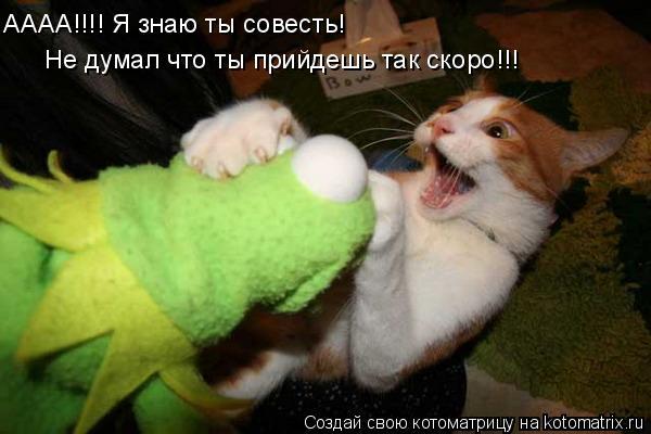 Котоматрица: АААА!!!! Я знаю ты совесть! Не думал что ты прийдешь так скоро!!!