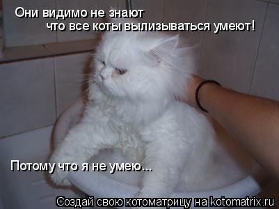 Котоматрица: Они видимо не знают что все коты вылизываться умеют! Потому что я не умею...