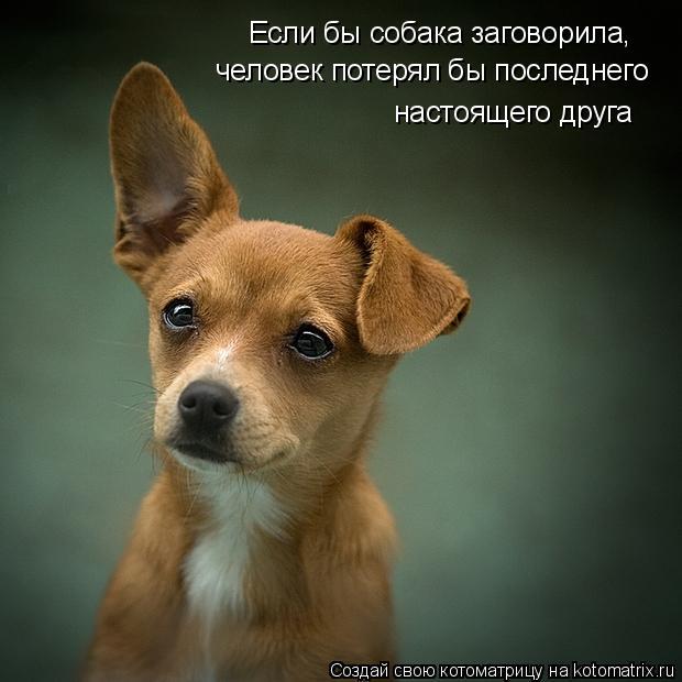 Котоматрица: Если бы собака заговорила, человек потерял бы последнего  настоящего друга