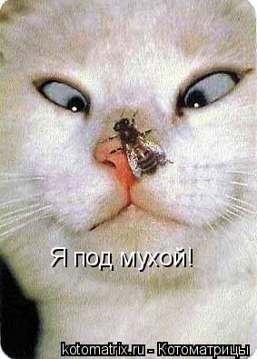 Котоматрица: Я под мухой!