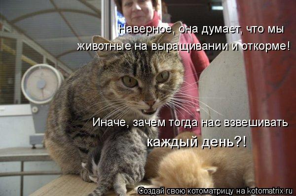 Котоматрица: Наверное, она думает, что мы животные на выращивании и откорме! Иначе, зачем тогда нас взвешивать каждый день?!