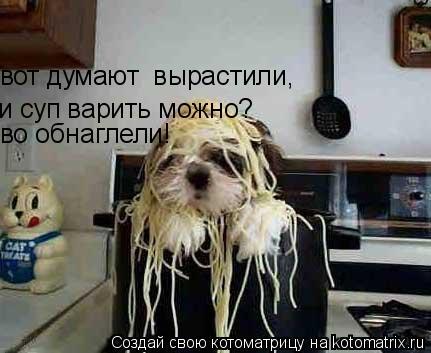 Котоматрица: вот думают  вырастили,  и суп варить можно? во обнаглели!