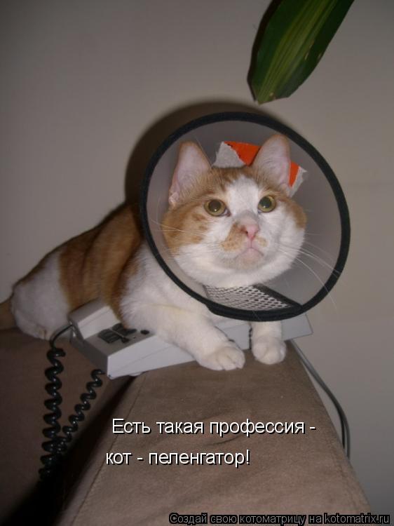 Котоматрица: Есть такая профессия - кот - пеленгатор!