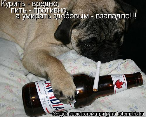 Котоматрица: Курить - вредно, пить - противно, а умирать здоровым - взападло!!!