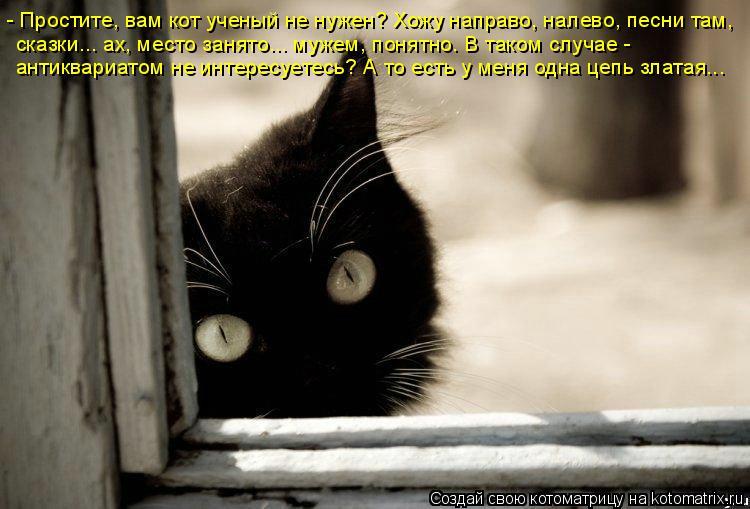 Котоматрица: - Простите, вам кот ученый не нужен? Хожу направо, налево, песни там, сказки... ах, место занято... мужем, понятно. В таком случае -  антиквариатом