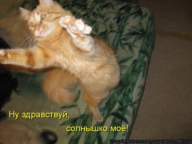 Котоматрица: Ну здравствуй, солнышко моё!