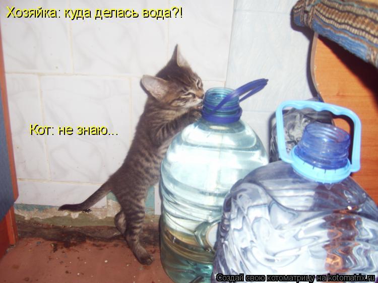Котоматрица: Хозяйка: куда делась вода?! Кот: не знаю...