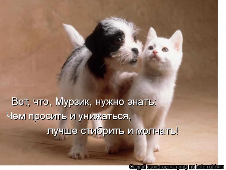 Котоматрица: Чем просить и унижаться,  лучше стибрить и молчать! Вот, что, Мурзик, нужно знать: