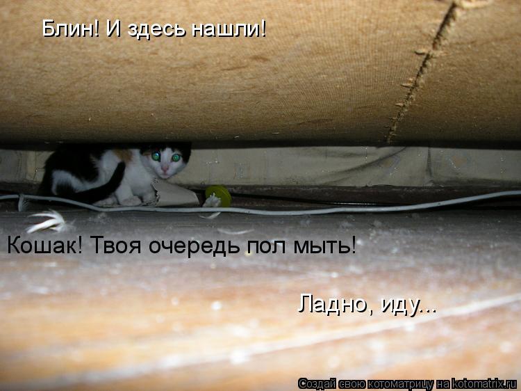 Котоматрица: Блин! И здесь нашли!  Кошак! Твоя очередь пол мыть! Ладно, иду...