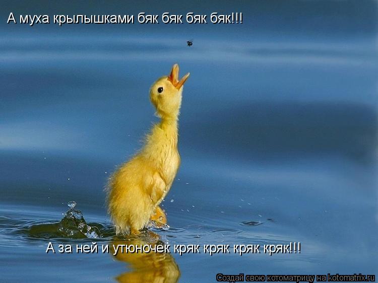 Котоматрица: А муха крылышками бяк бяк бяк бяк!!! А за ней и утюночек кряк кряк кряк кряк!!!
