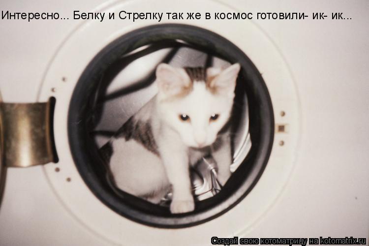 Котоматрица: Интересно... Белку и Стрелку так же в космос готовили- ик- ик...