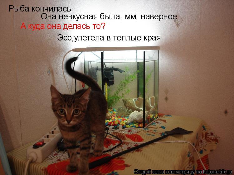 Котоматрица: Рыба кончилась. Она невкусная была, мм, наверное Она невкусная была, мм, наверное А куда она делась то? Эээ,улетела в теплые края