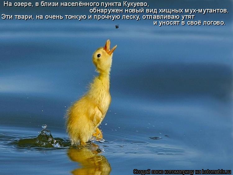 Котоматрица: На озере, в близи населённого пункта Кукуево,  обнаружен новый вид хищных мух-мутантов. Эти твари, на очень тонкую и прочную леску, отлавлива