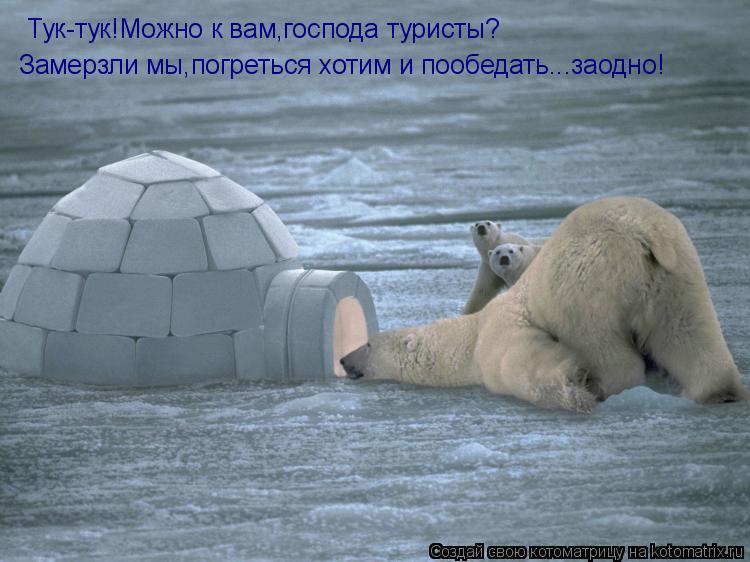 Котоматрица: Тук-тук!Можно к вам,господа туристы? Замерзли мы,погреться хотим и пообедать...заодно!