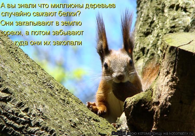 Котоматрица: А вы знали что миллионы деревьев случайно сажают белки? Они закапывают в землю  орехи, а потом забывают куда они их закопали