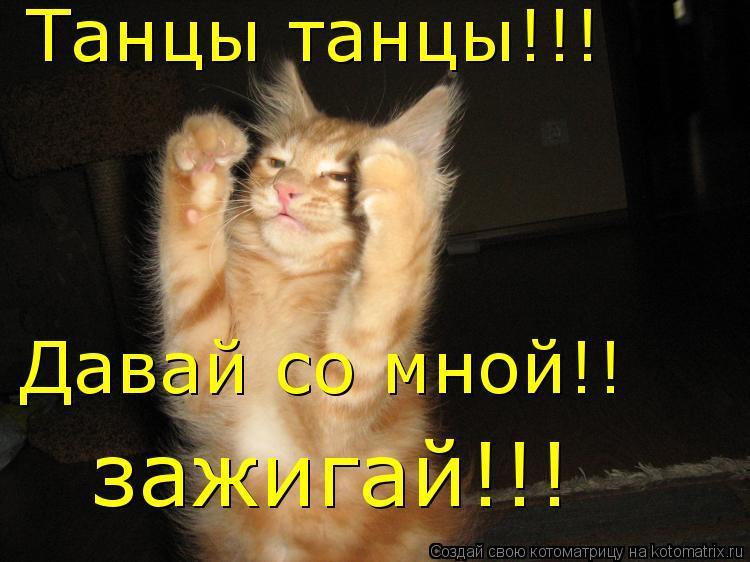 Котоматрица: Танцы танцы!!! Давай со мной!! зажигай!!!