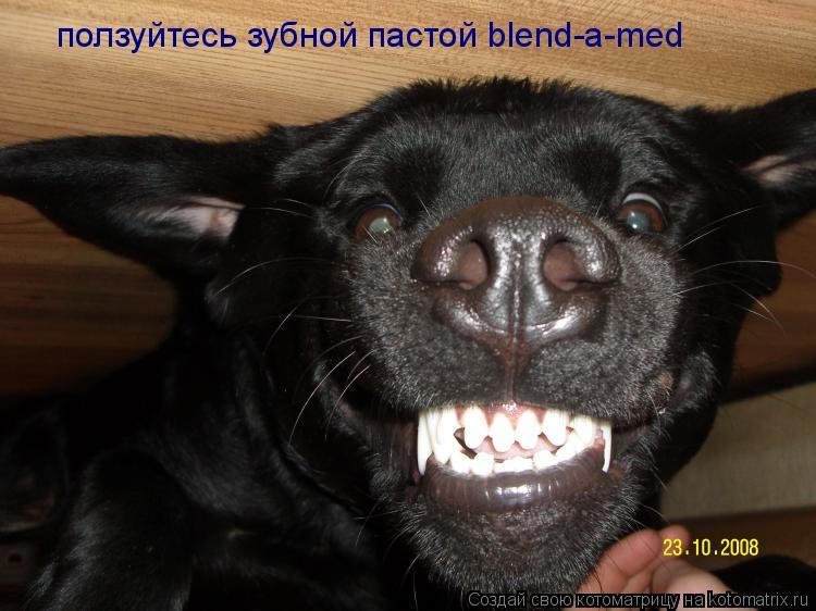Котоматрица: ползуйтесь зубной пастой blend-a-med
