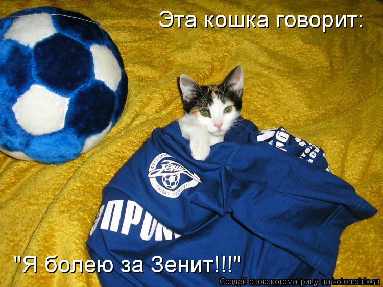 """Котоматрица: Эта кошка говорит: """"Я болею за Зенит!!!"""""""