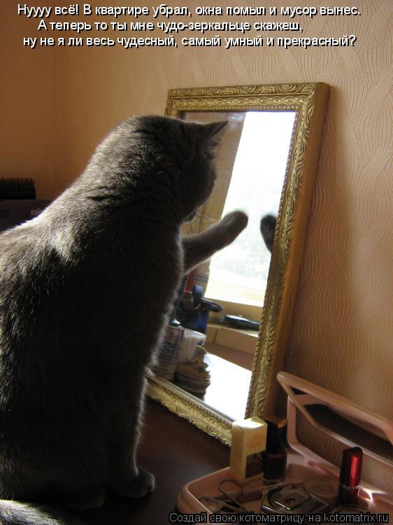 Котоматрица: Нуууу всё! В квартире убрал, окна помыл и мусор вынес. А теперь то ты мне чудо-зеркальце скажеш, ну не я ли весь чудесный, самый умный и прекра