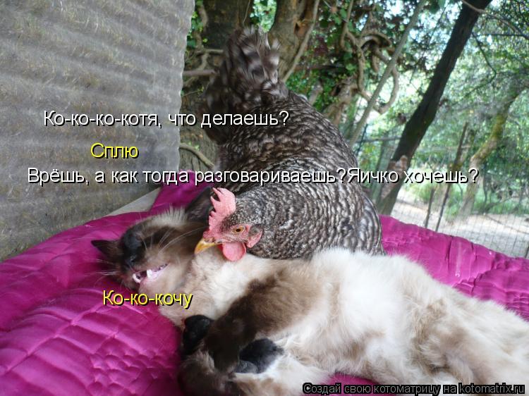 Котоматрица: Ко-ко-ко-котя, что делаешь? Сплю Врёшь, а как тогда разговариваешь?Яичко хочешь? Ко-ко-кочу