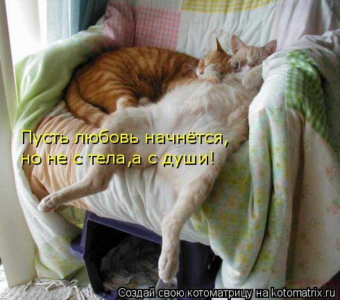 Котоматрица: Пусть любовь начнётся, но не с тела,а с души!