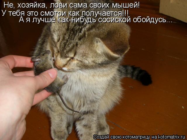 Котоматрица: Не, хозяйка, лови сама своих мышей! У тебя это смотри как получается!!! А я лучше как-нибудь сосиской обойдусь...