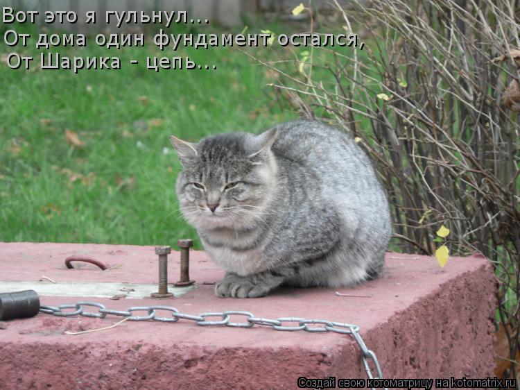Котоматрица: Вот это я гульнул... От дома один фундамент остался,  От Шарика - цепь...