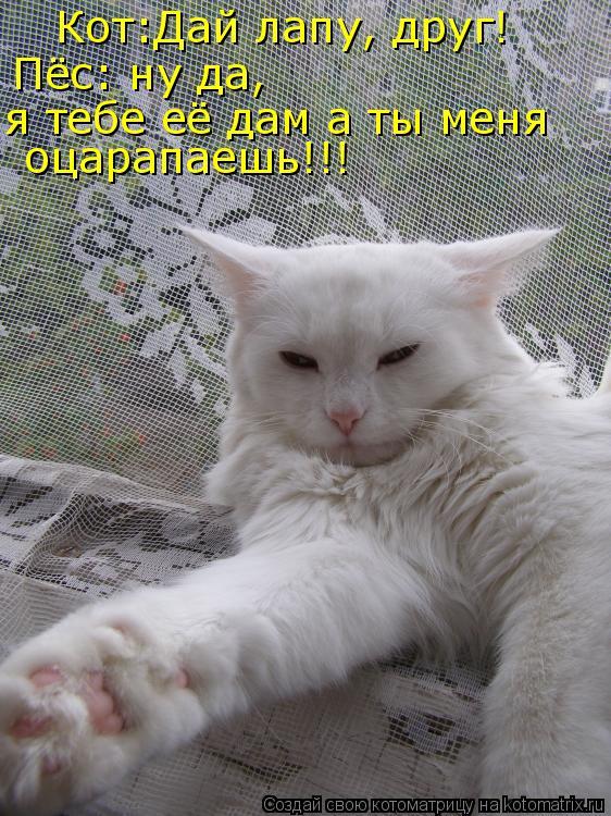 Котоматрица: Кот:Дай лапу, друг! Пёс: ну да, я тебе её дам а ты меня оцарапаешь!!!