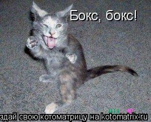 Котоматрица: Бокс, бокс!