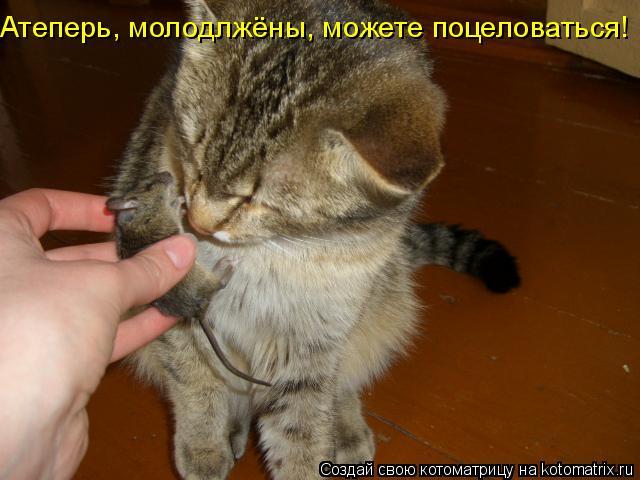 Котоматрица: Атеперь, молодлжёны, можете поцеловаться!