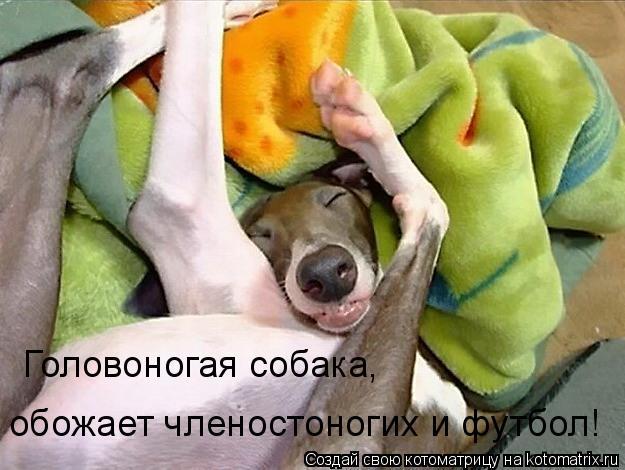 Котоматрица: Головоногая собака,  обожает членостоногих и футбол!