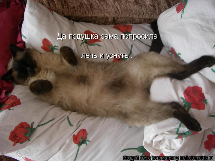 Котоматрица: Да подушка сама попросила лечь и уснуть..