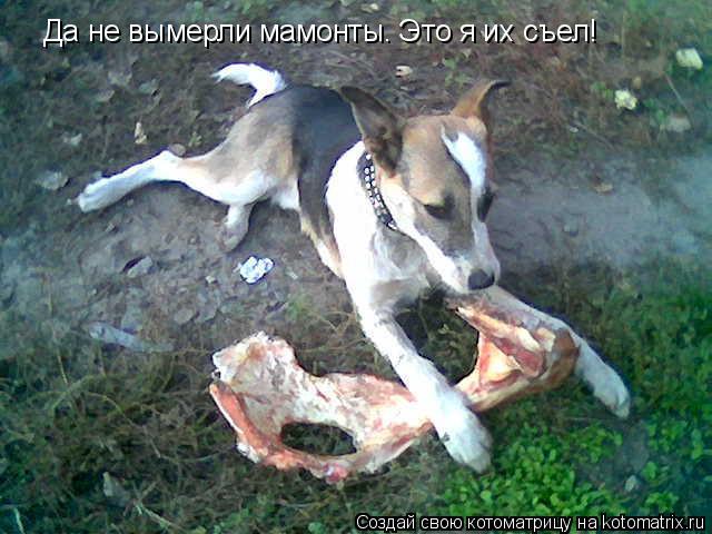 Котоматрица: Да не вымерли мамонты. Это я их съел!