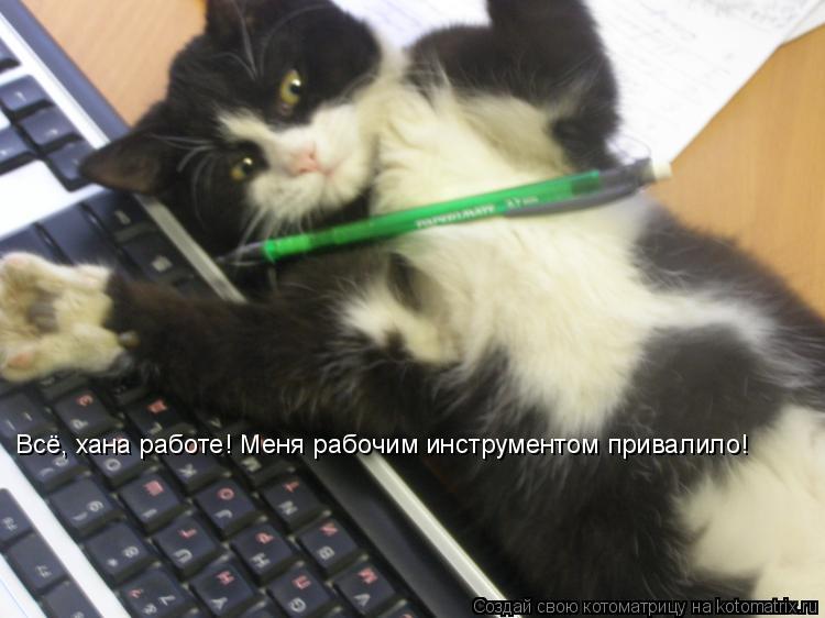 Котоматрица: Всё, хана работе! Меня рабочим инструментом привалило!