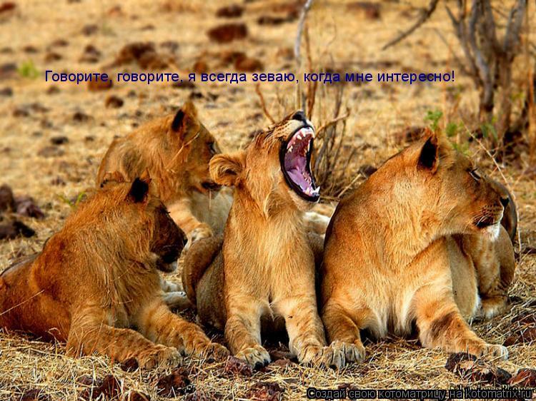 Котоматрица: Говорите, говорите, я всегда зеваю, когда мне интересно!