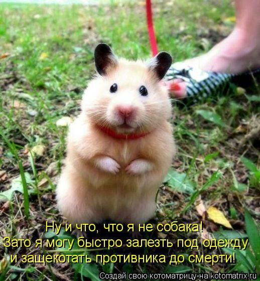 Котоматрица: Ну и что, что я не собака! Зато я могу быстро залезть под одежду  и защекотать противника до смерти!