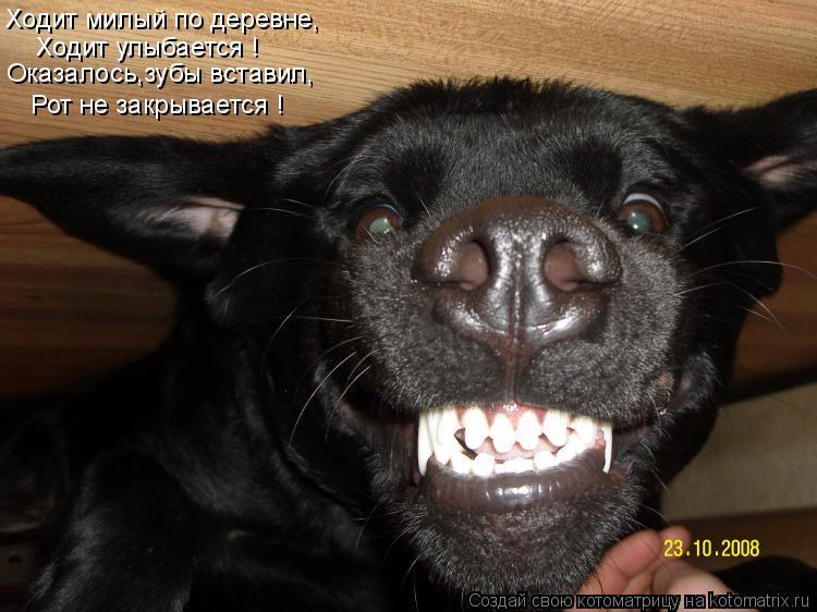 Котоматрица: Ходит милый по деревне, Ходит улыбается ! Оказалось,зубы вставил, Рот не закрывается !